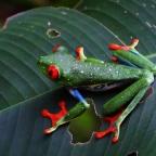 Costa Rica: Groen, groener, groenst.