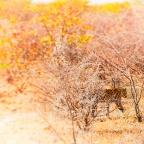 Namibië: Op safari Deel 1