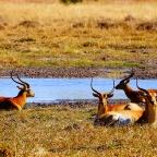 Botswana: Op safari Deel 2