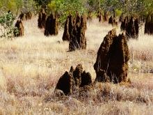 Termite Hills